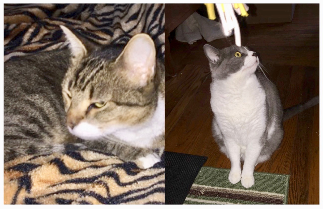 lucy-molly - Cat Tales CT